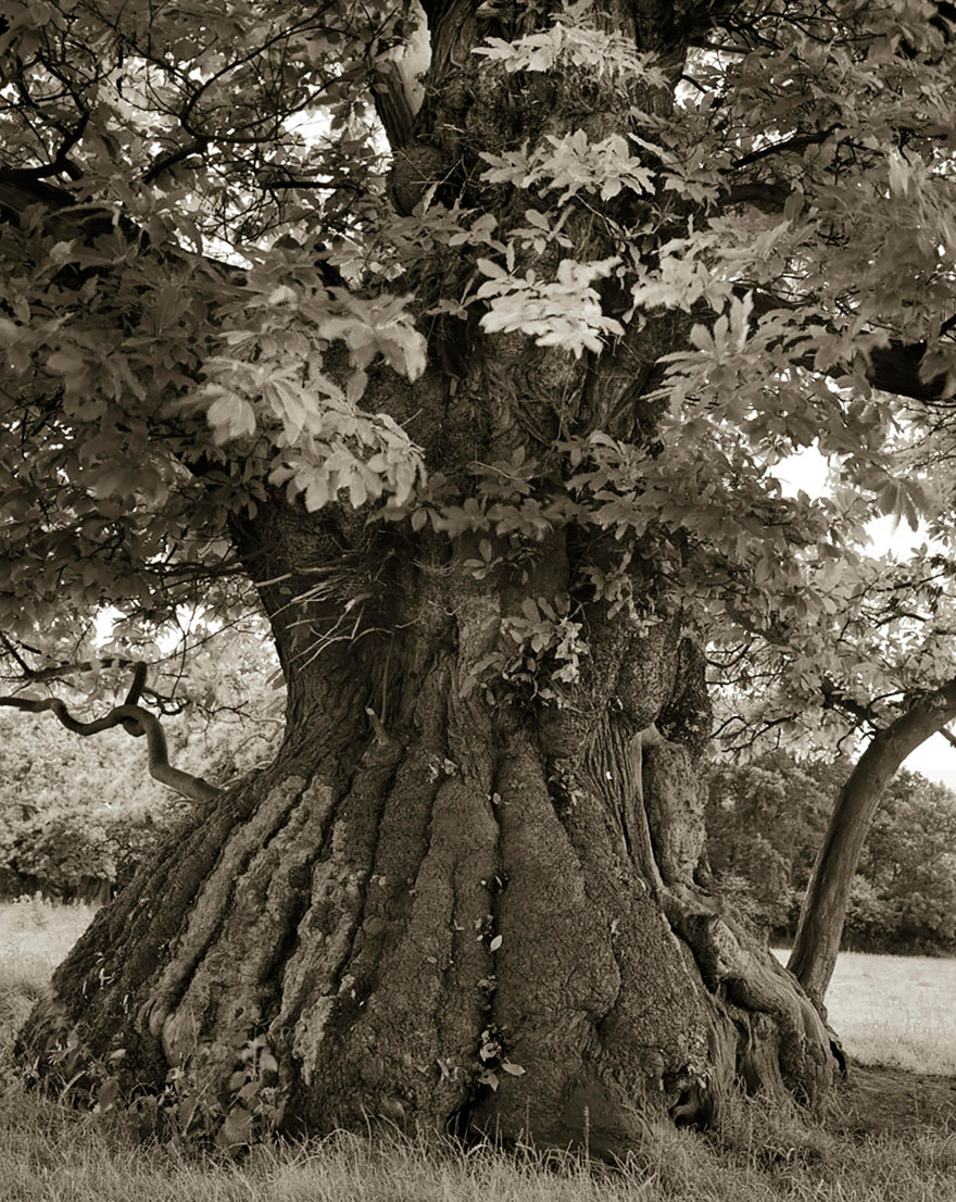 oldest-trees-beth-moon-19