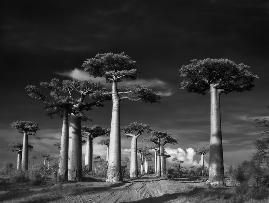 oldest-trees-beth-moon-2