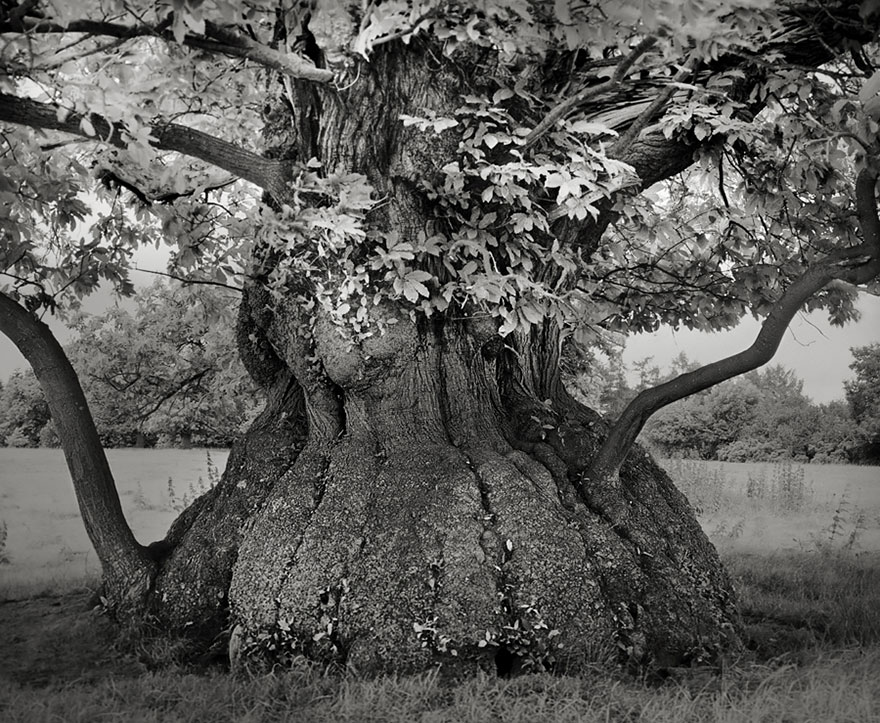 oldest-trees-beth-moon-7