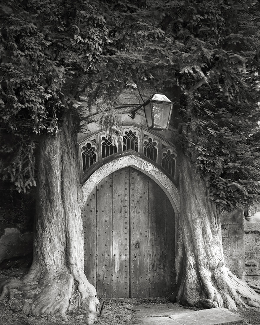 oldest-trees-beth-moon-9