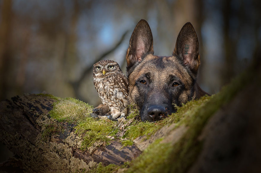 15 Heartwarming Photos Of A Dog And An Owl Who Became Best Friends. #8 Is Absolutely Adorable. thumbnail
