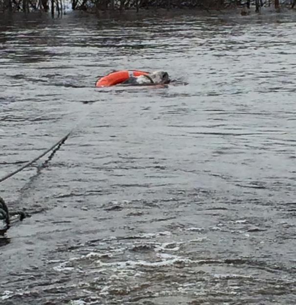 rescued-donkey-river-flood-ireland-2