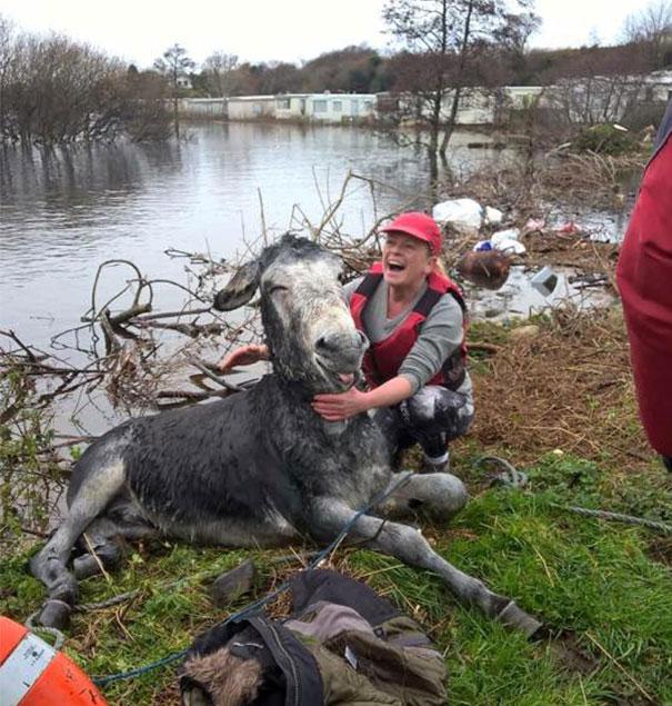 rescued-donkey-river-flood-ireland-5
