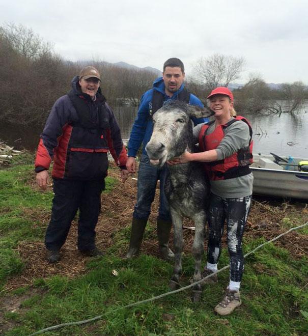 rescued-donkey-river-flood-ireland-7