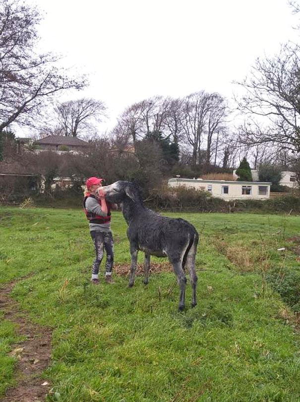 rescued-donkey-river-flood-ireland-9