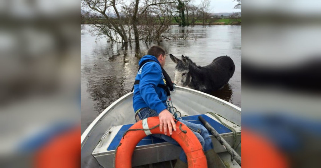 Happy Donkey Smiles From Ear To Ear After Being Saved From Drowning In Flooded River In Ireland thumbnail