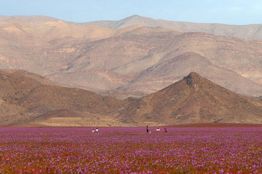 Rain Turned Earth S Driest Desert Into A Heavenly Oasis
