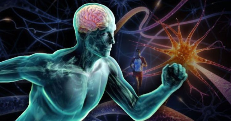 The Science Behind Exercise and Your Brain thumbnail