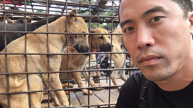 Man Rescues 1,000 Dogs From China's Dog Meat Festival thumbnail