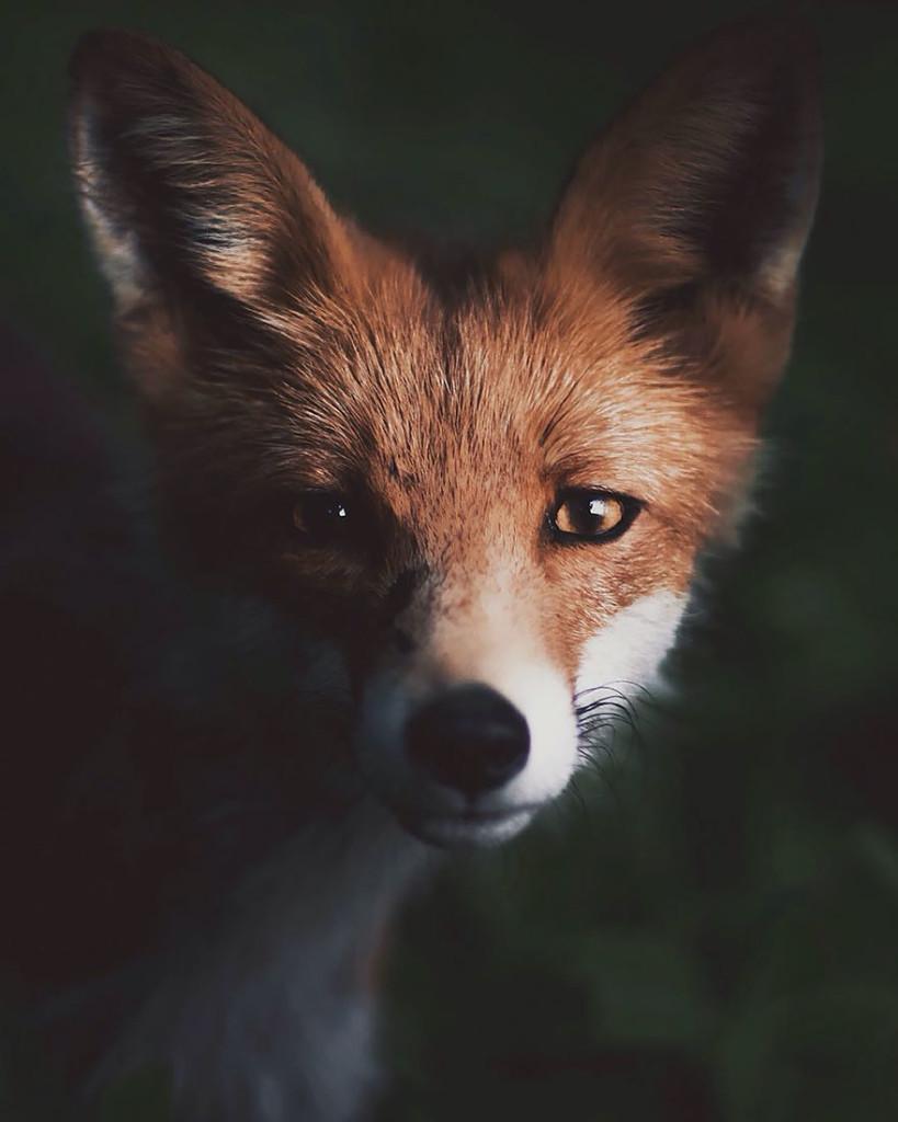 wild-animal-photography-1