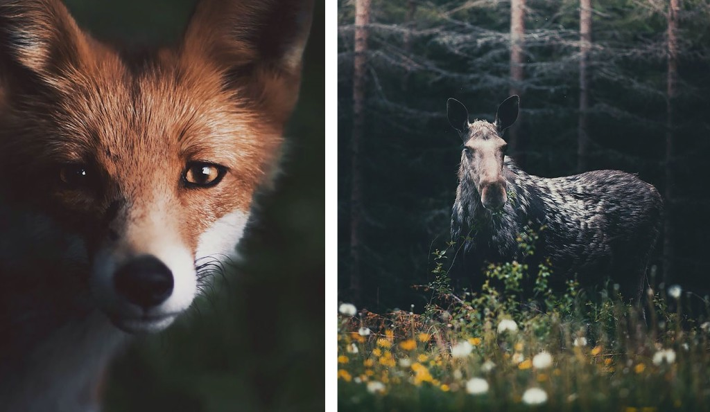 14 Breathtaking Animal Shots Reveal The Soul Of The Forest thumbnail