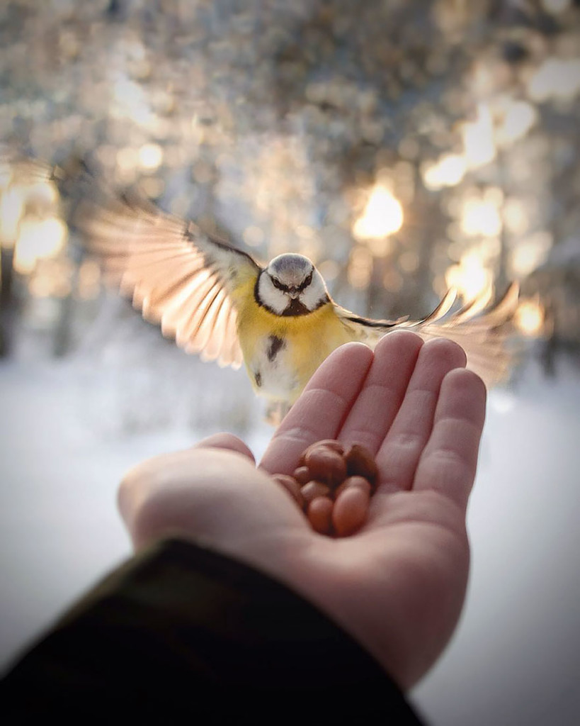 wild-animal-photography-13