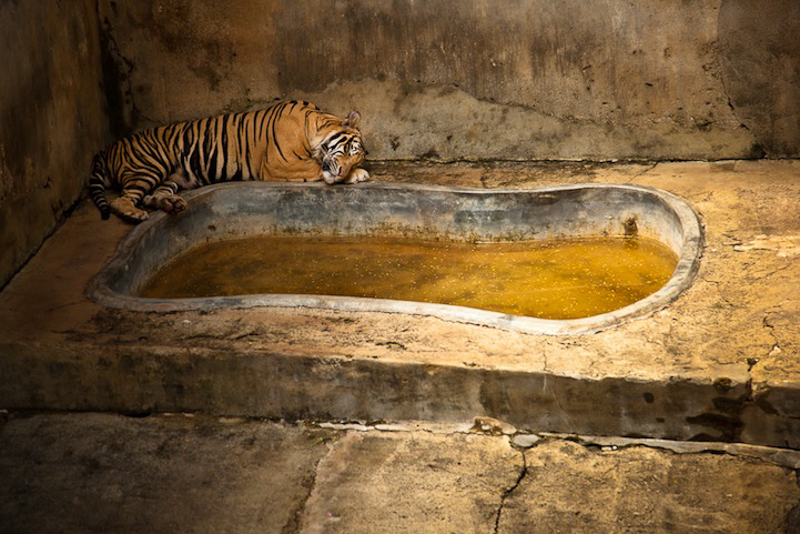 8 Heartbreaking Photos Exposing Zoos As Animal Prisons thumbnail