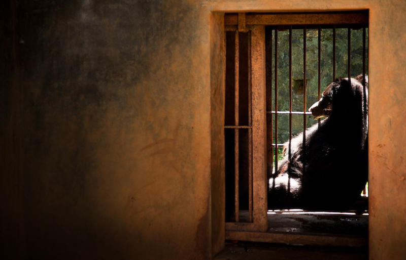 zoos-animal-prisons-6