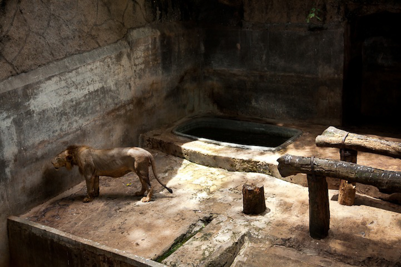 zoos-animal-prisons-8