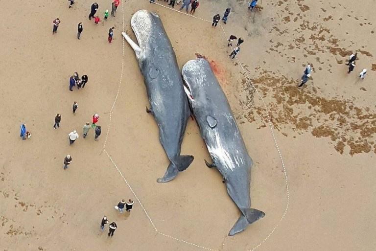 sperm-whales-dead