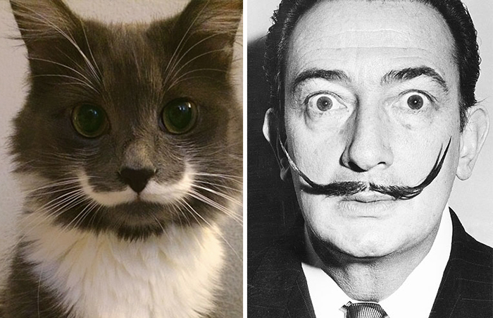 These 20 Animals Have A Human Doppelganger – Number 7 Will Crack You Up! thumbnail