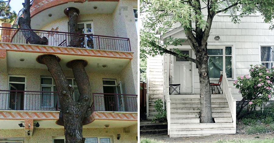 These Creative Architects Built Houses Around Local Trees Instead Of Cutting Them Down thumbnail