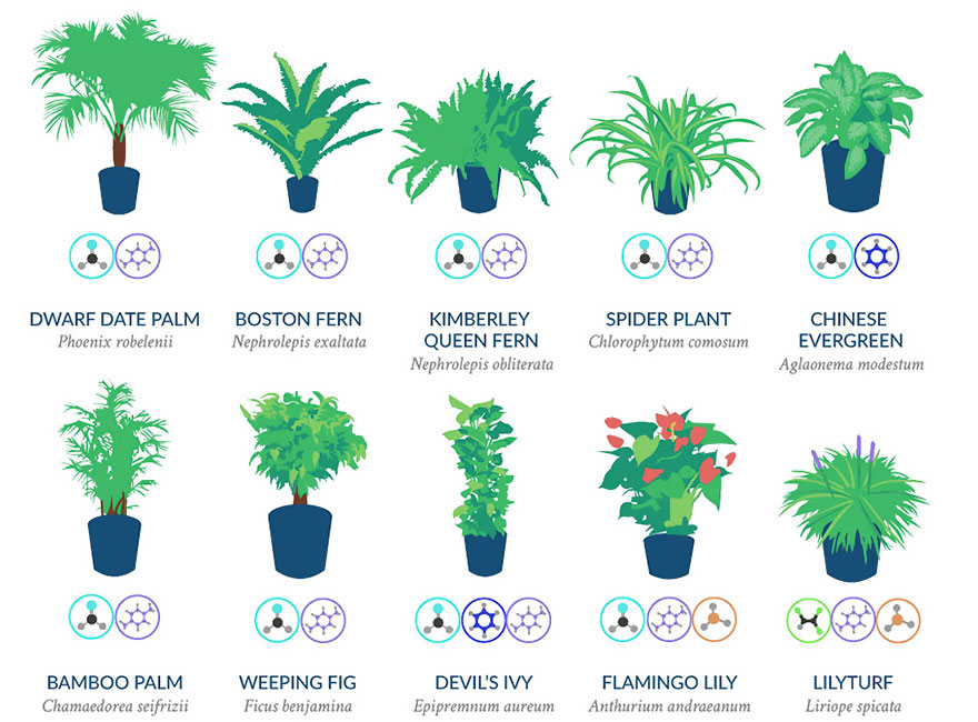 These Plants Could Save Your Life: NASA Reveals Most Effective Air-Cleaning Plants For Your Home