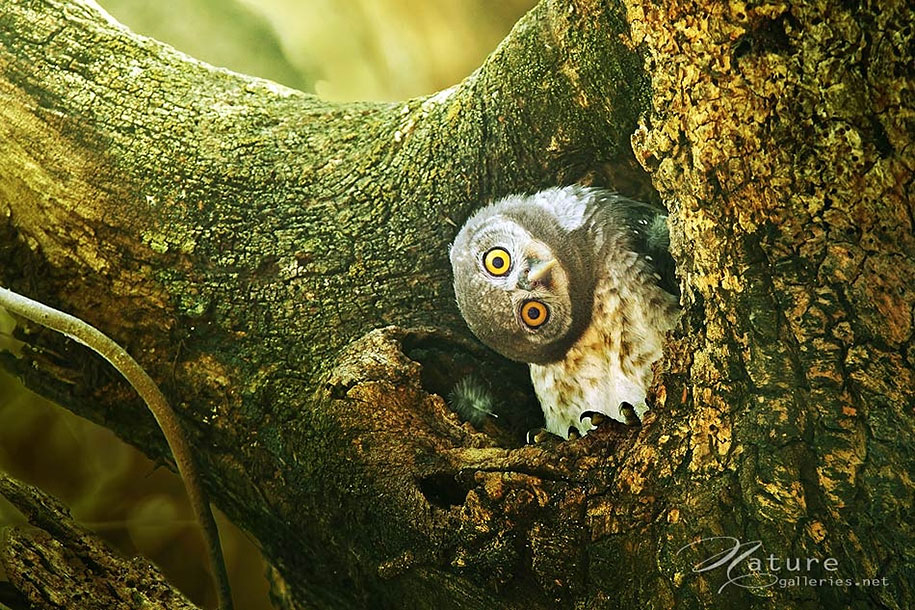 13 Images Of Adorable Owl Hanging Out In Beautiful Nature thumbnail