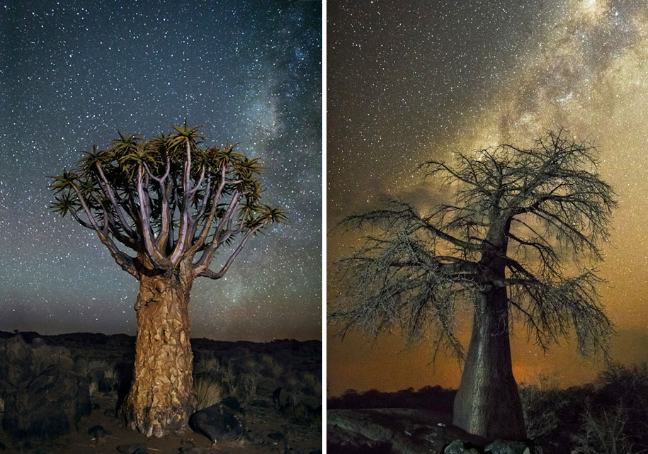 12 Mesmerizing Photos Of Old Trees Illuminated By Magical Starlight thumbnail