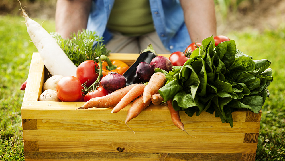 The 6 Most Important Environmental Benefits Of Organic Farming thumbnail
