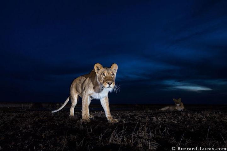 Remote Control Camera Captures Stunning Photos Of Wild