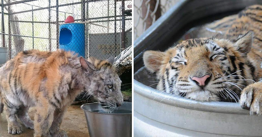 14 Animals That Were About To Die And Got A Second Chance In Life thumbnail