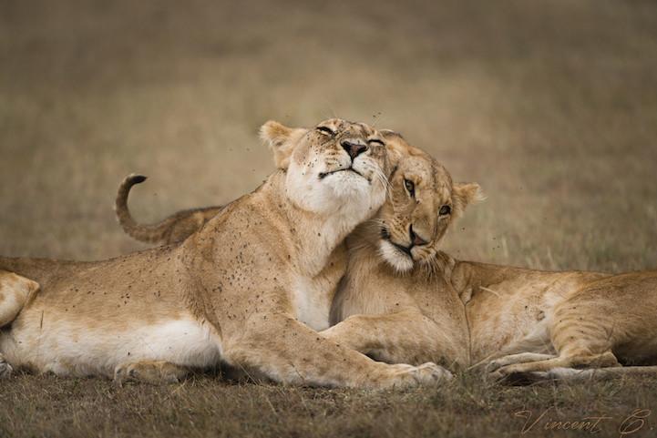 18 heartwarming photos of adorable hugging animals