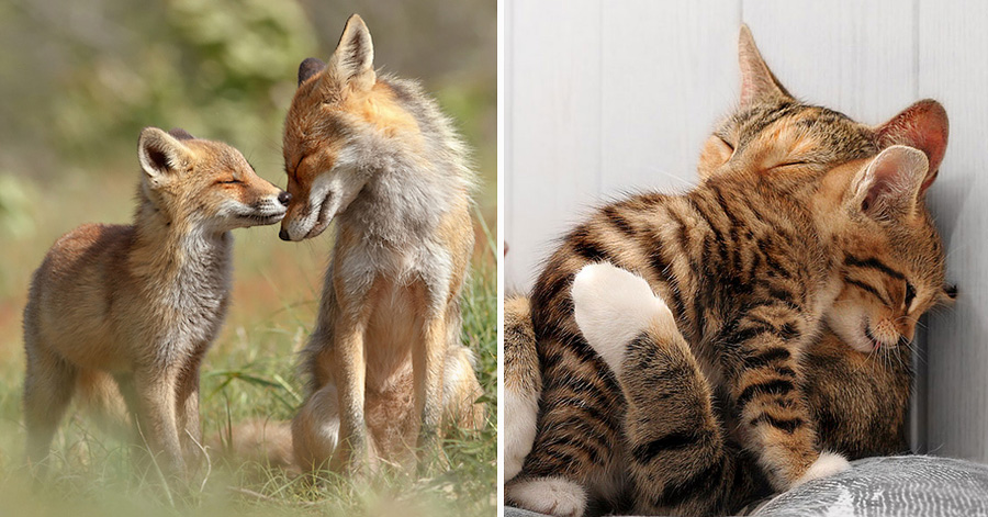 18 Heartwarming Photos Of Adorable Hugging Animals That Will Brighten Up Your Day thumbnail