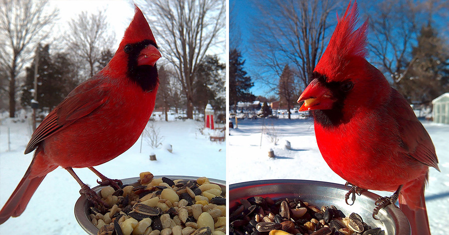 Woman Takes Love For Birds To The Next Level And Installs A Camera For Incredible Close-Ups thumbnail