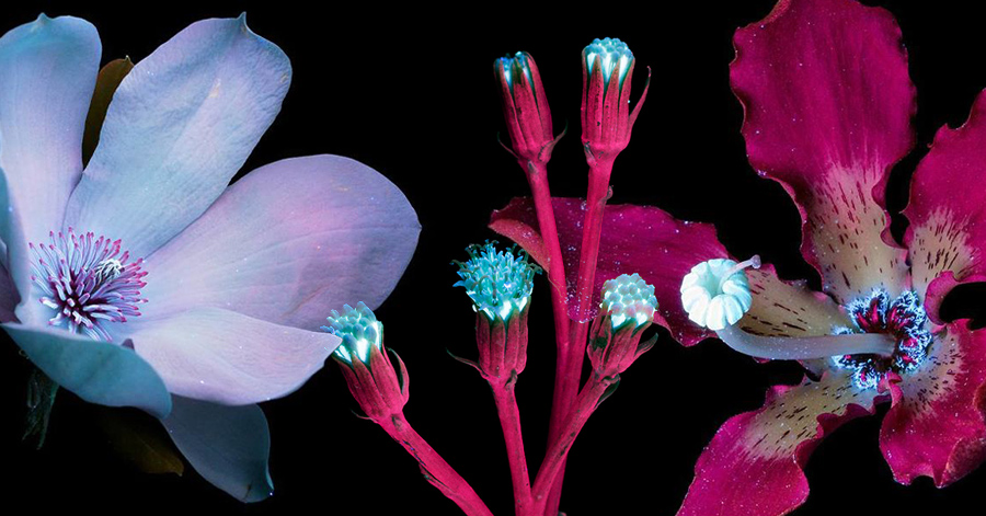20 Magical Photographs Of Plants Emitting Invisible Light & Glowing Beautifully In The Dark