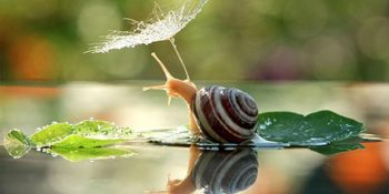 The Magical World Of Snails: 21 Photos That Will Leave You Speechless