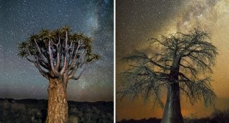 12 Mesmerizing Photos Of Old Trees Illuminated By Magical Starlight