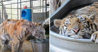 14 Animals That Were About To Die And Got A Second Chance In Life