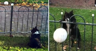 Intelligent Dog Finds A Clever Way Of Making Everybody Play Fetch With Him